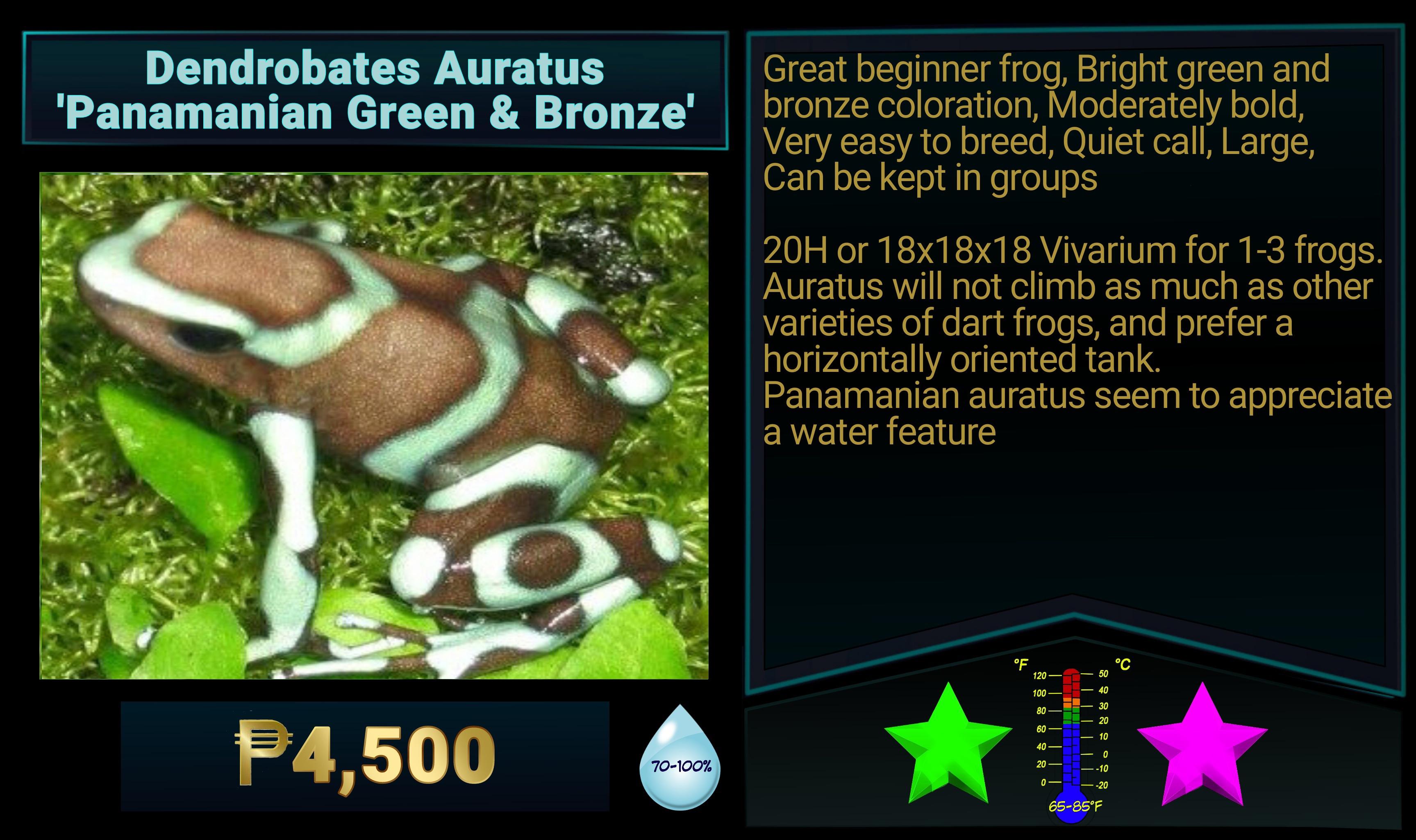 Dendrobates auratus Panamanian Green and Bronze