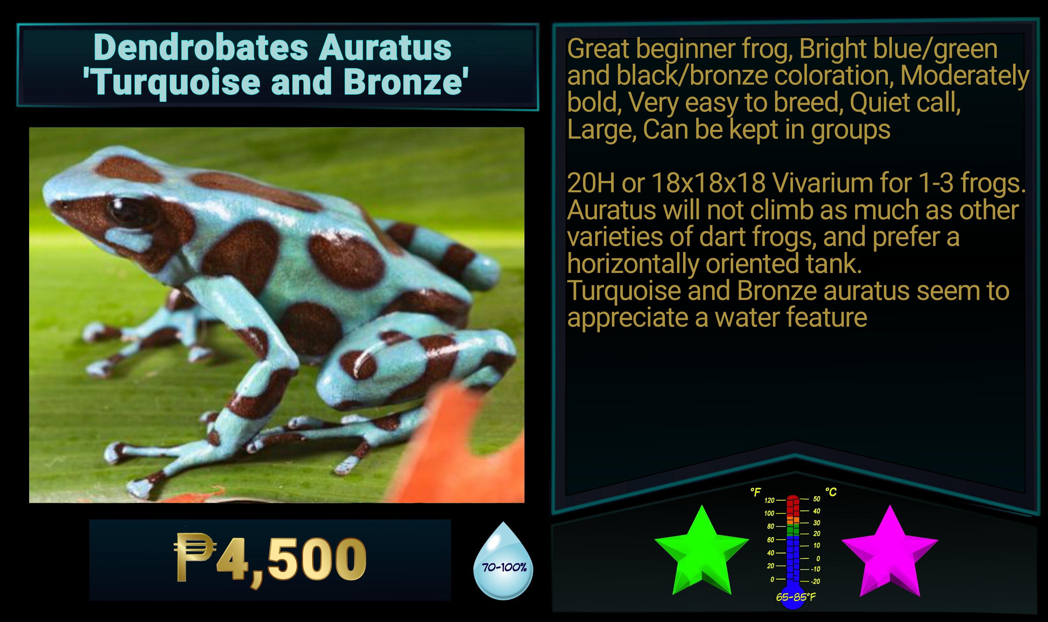 Dendrobates auratus Turquoise and Bronze
