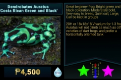 Dendrobates auratus Costa Rican Green and Black