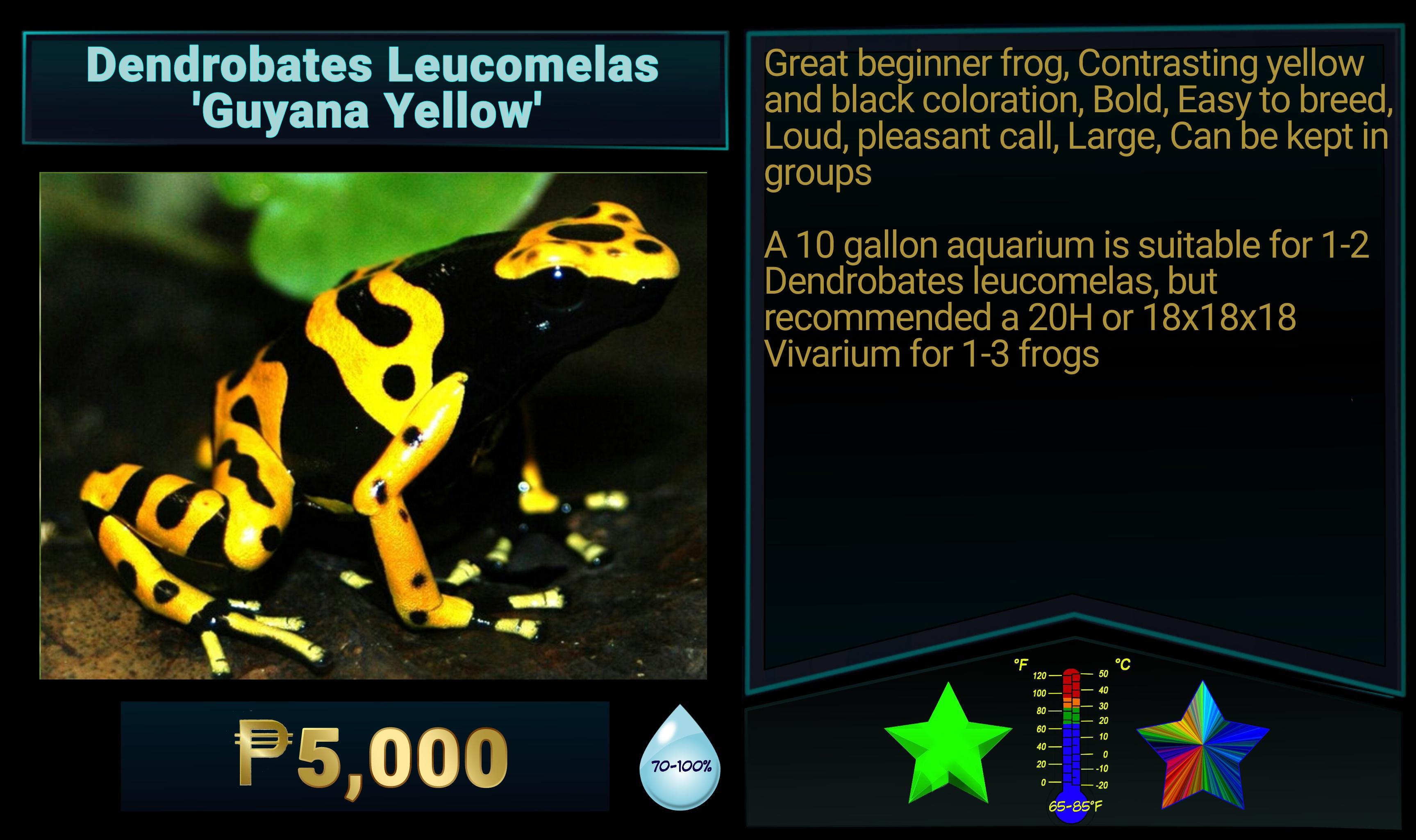 Dendrobates LeucomelasGuyana Yellow