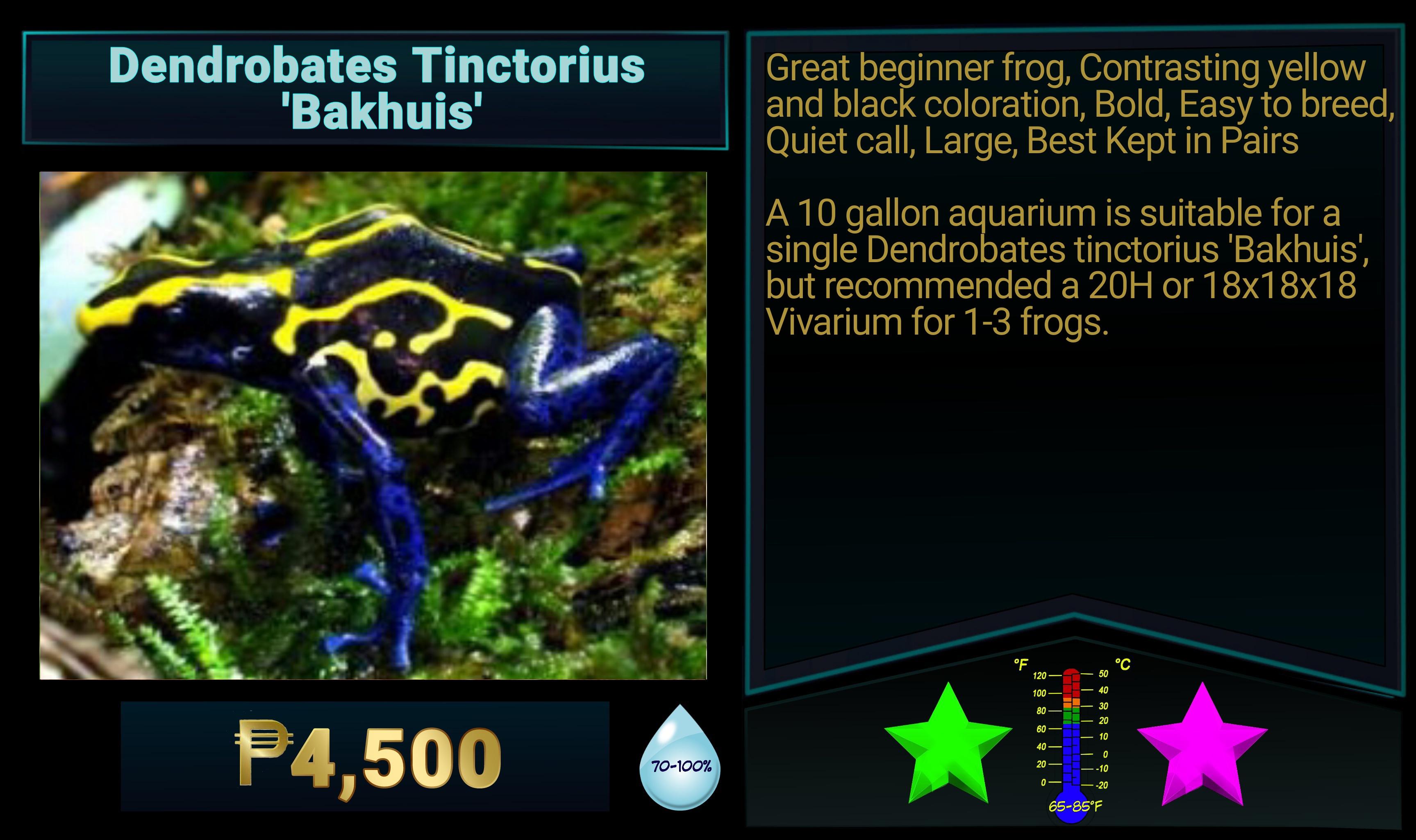 Dendrobates tinctorius Bakhuis