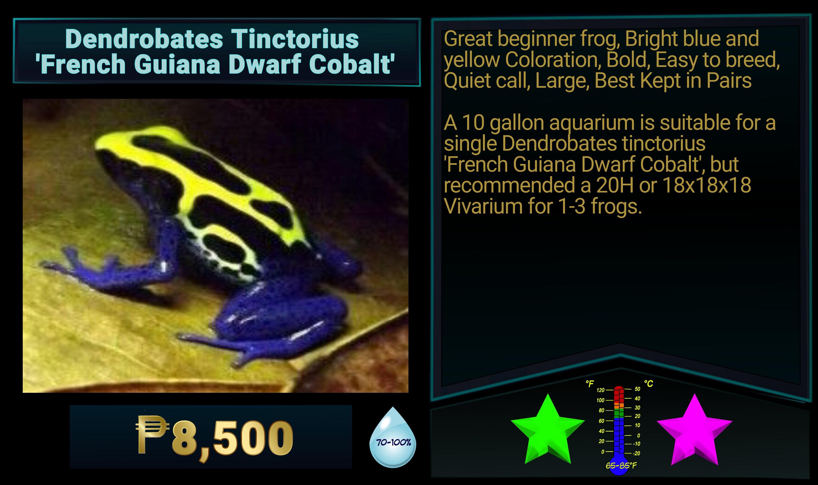 Dendrobates tinctorius French Guiana Dwarf Cobalt