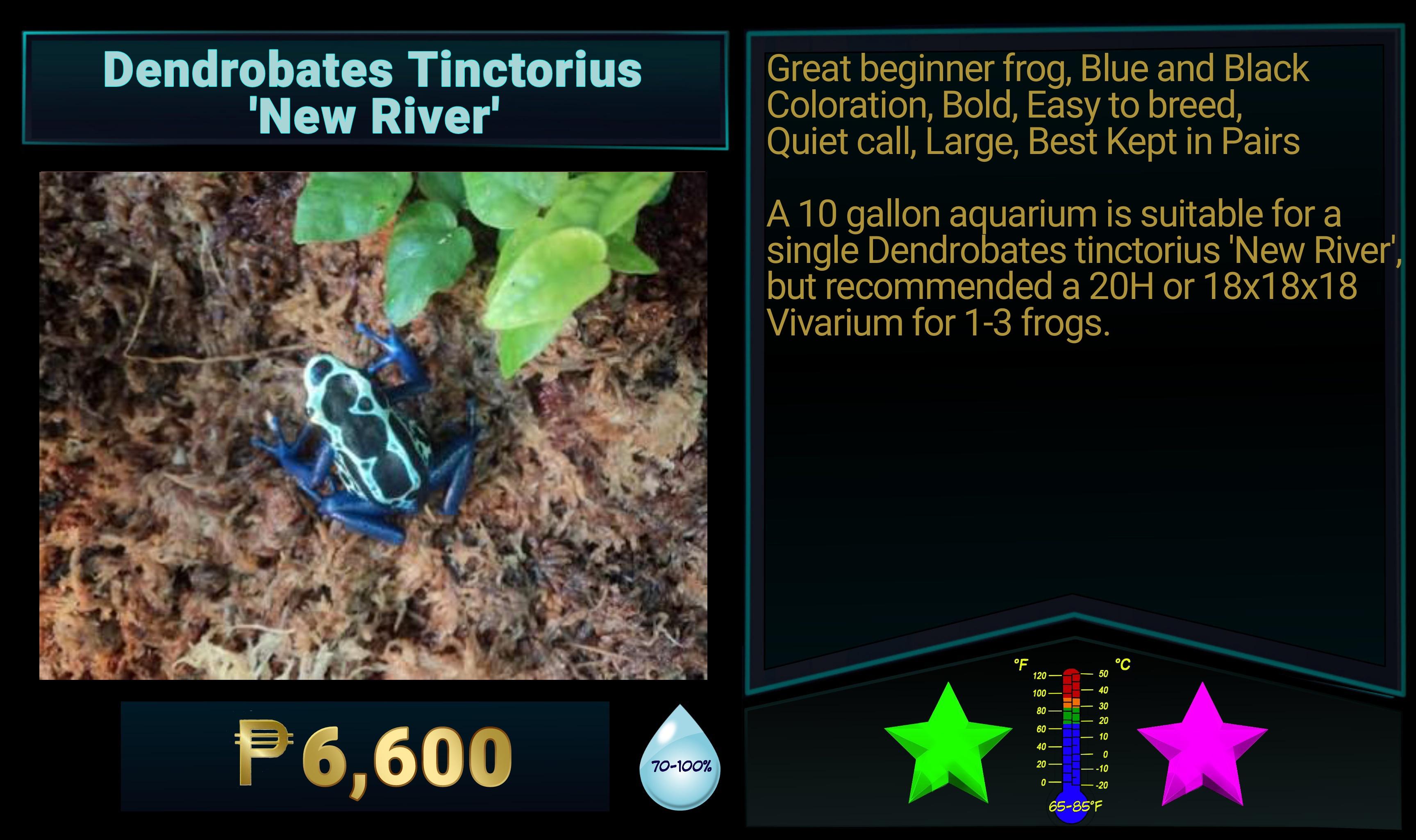 Dendrobates tinctorius New River