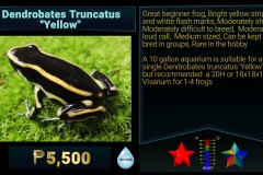 Dendrobates truncatus Yellow