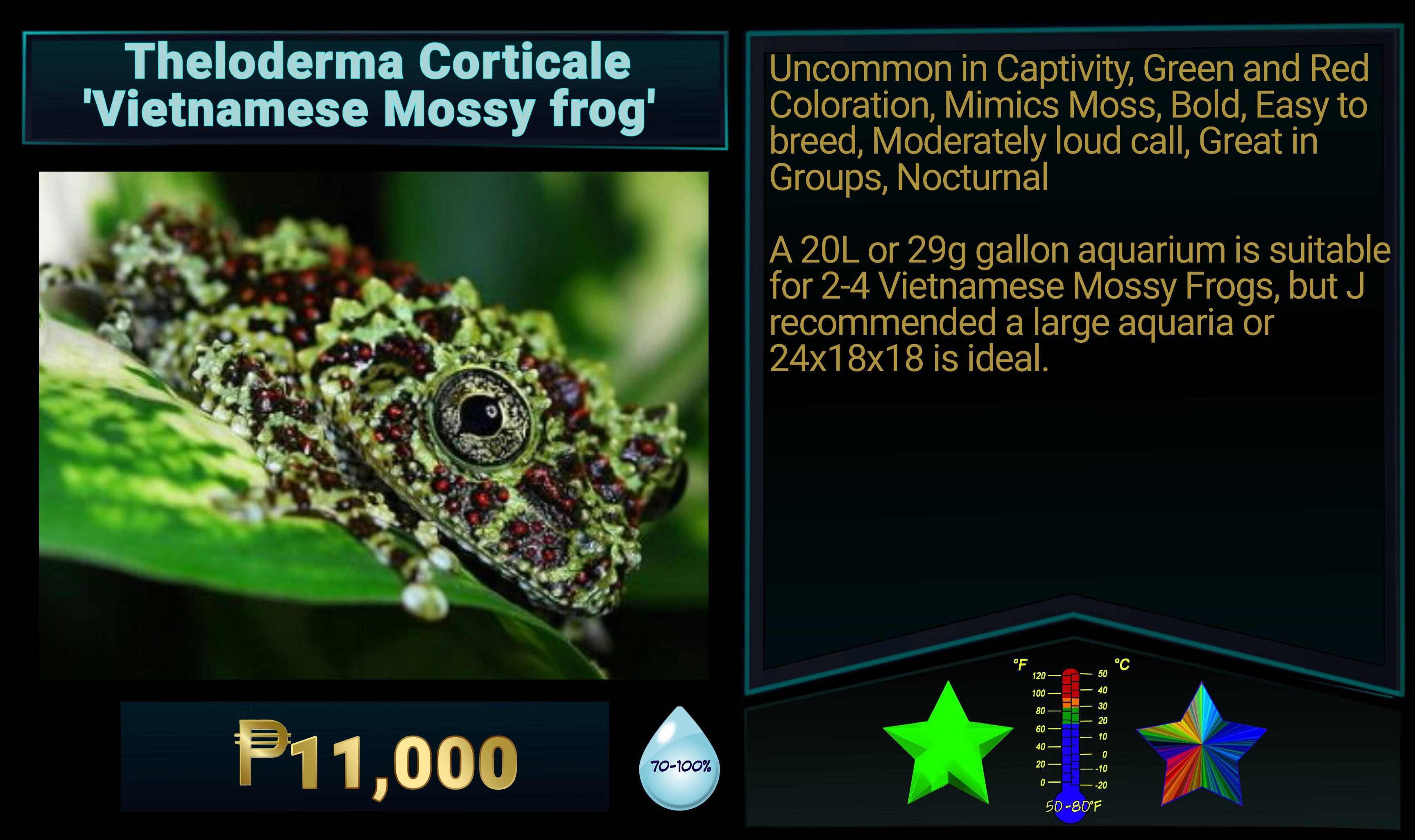 Theloderma corticale Vietnamese Mossy Frog