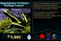 Epipedobates trivittarus Huallaga Canyon