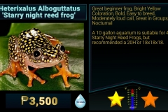 Heterixalus Alboguttatus Starry Night Reed Frog