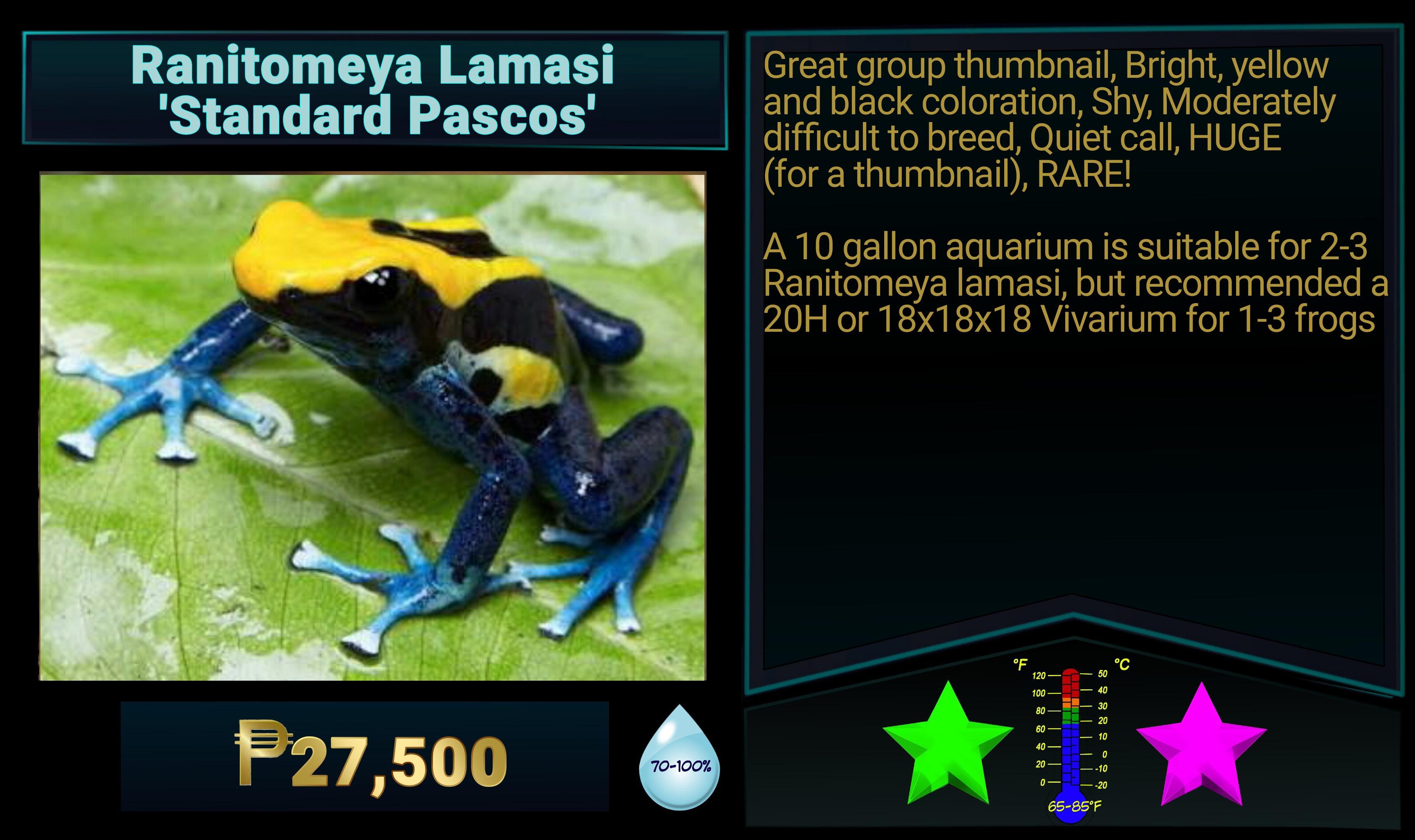 Ranitomeya lamasi Standard Pascos