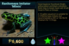 Ranitomeya imitator Mimic